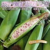 【果農直配-全省免運】黑斑比彩虹甜糯玉米x8根(5台斤±10%)