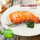 【屏聚美食】蔚藍海-加勒比海龍蝦身5尾(220g±10%/隻)免運組