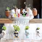 療育吸水小動物盆栽【BI06004】...