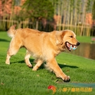 狗狗玩具耐咬幼犬磨牙發聲大型犬寵物玩具鈴鐺球解悶【小獅子】