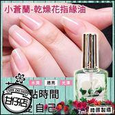 韓國 Barbie 小蒼蘭 乾燥花 指緣油 7ml 甘仔店3C配件
