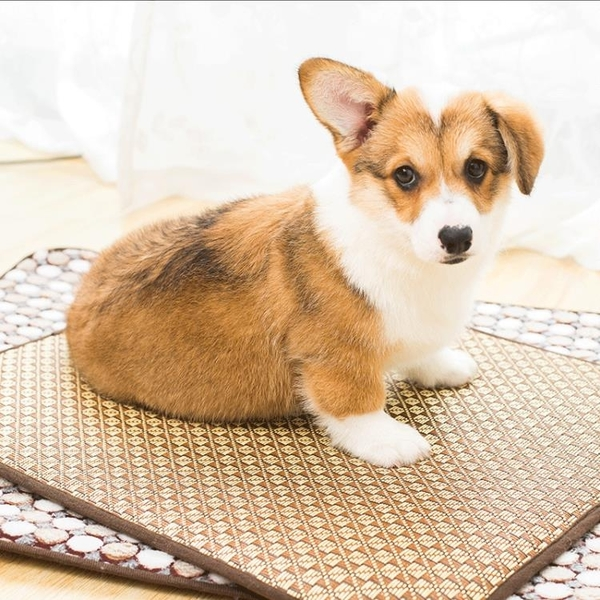 多張狗狗涼席墊子降溫狗窩墊寵物用品冰墊子狗睡墊地墊