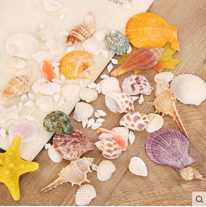 F0632 迷妝 純天然海螺貝殼 地中海風格家居合集造景擺件專用魚缸裝飾品