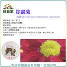 【綠藝家】大包裝00H50.除蟲菊種子6...