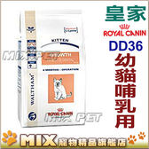 ◆MIX米克斯◆代購皇家貓飼料. 【DD36】.幼貓 哺乳母貓 2kg.VET疾病預防頂級飼料