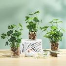 創意綠植四葉草金錢草仿真盆栽家居裝飾辦公桌面養眼仿真植物盆景