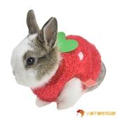 寵物保暖草莓兔子衣服豚鼠荷蘭豬寵物毛絨衣服茶杯犬【小獅子】
