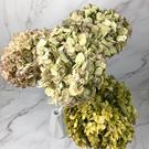 進口乾燥天然繡球花-乾燥花圈 乾燥花束 ...
