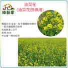【綠藝家00A16-2】油菜花種子(油菜...