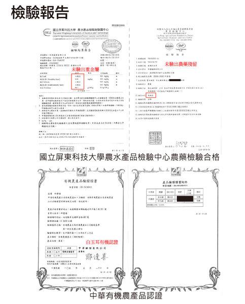 有機新鮮白玉耳 / 白木耳-袋裝 1公斤 (1000g) -- 921社會企業