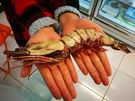 【禧福水產】深海肥豬蝦6隻/海熊蝦/熊蝦/海草蝦/手臂蝦◇$特價999元/700g±10◇挑戰最低價 團購