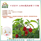 【綠藝家】大包裝G99.紅辣妹魔鬼椒種子120顆