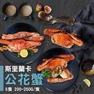 【屏聚美食】斯里蘭卡公花蟹5隻(200-250g/隻)