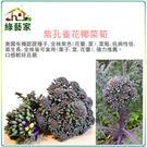 【綠藝家】B06.紫孔雀花椰菜筍種子20顆