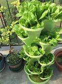 熱銷種植箱陽台多層立體種菜盆組合草莓栽培花盆架子蔬菜種植箱多肉盆綠蘿盆LX