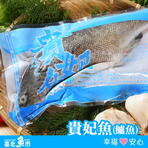 【台北魚市】生產追溯 貴妃魚 500g