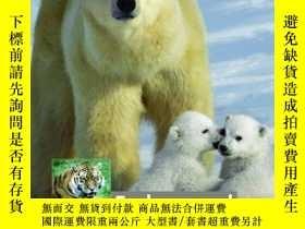 二手書博民逛書店Endangered罕見Species (Chambers Wo