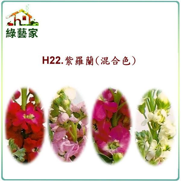 【綠藝家】H22.紫羅蘭(混合色,高40~60cm)種子0.16克(約70顆)