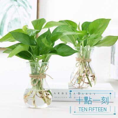 花瓶 創意簡約水培植物玻璃花瓶花盆透明風信子水養綠蘿 觀音竹插花瓶