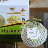 阿露斯洋香瓜-粗網綠肉1顆(1.2~1.5kg)