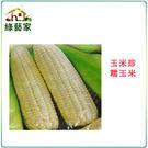 【綠藝家】G06.糯玉米(玉美珍)種子2...