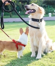 狗狗牽引繩狗錬子狗繩子泰迪金毛大型中型小型犬遛狗項圈寵物用品『艾莎』