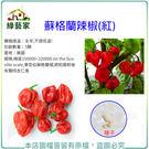 【綠藝家】G98.蘇格蘭辣椒(紅)種子5...