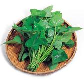 地瓜菜(地瓜葉)約250g*2包★安全蔬菜