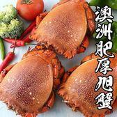 【下殺5折】澳洲肥厚旭蟹 *1隻組( 400g-500g/隻 )