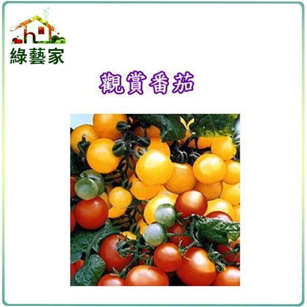 【綠藝家】P05.觀賞蕃茄種子(迷你貝)35顆