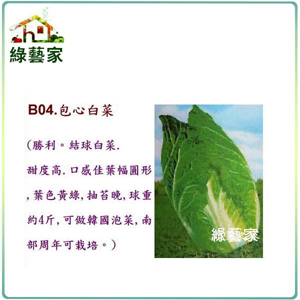 【綠藝家】B04.包心白菜種子100顆