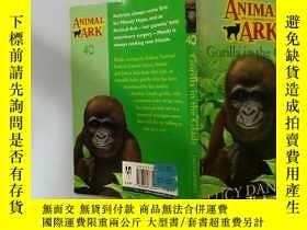 二手書博民逛書店Gorilla罕見in the Glade:林中大猩猩Y200392