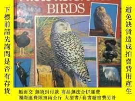 二手書博民逛書店《Artist s罕見Photo Reference BIRDS》Y1351 BART RULON 出版1