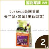 寵物家族-Burgess英國伯爵高機能天竺鼠飼料(黑莓&奧勒岡葉)2kg