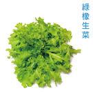 預購 【安心蔬食】水耕蔬菜-綠橡生菜(1...