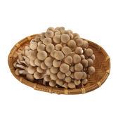 鴻喜菇120g