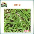 【綠藝家】超級假儉草種子1公斤裝(超級喬治亞.純度99%)