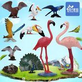 仿真動物園鳥類模型火烈鳥鸚鵡老鷹孔雀貓頭鷹兒童男女孩玩具套裝YYP  傑克型男館