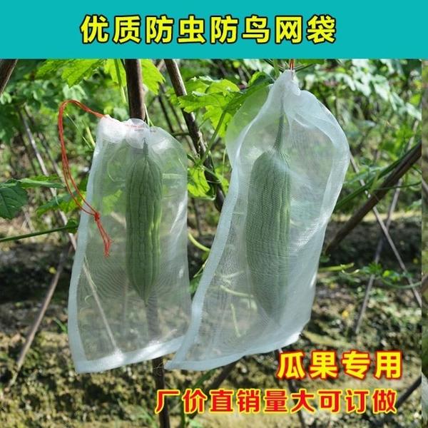 防鳥網 10個裝防蟲網防蟲袋 尼龍網袋 瓜果防果蠅防鳥袋濾網浸種 葡萄水果套袋 交換禮物