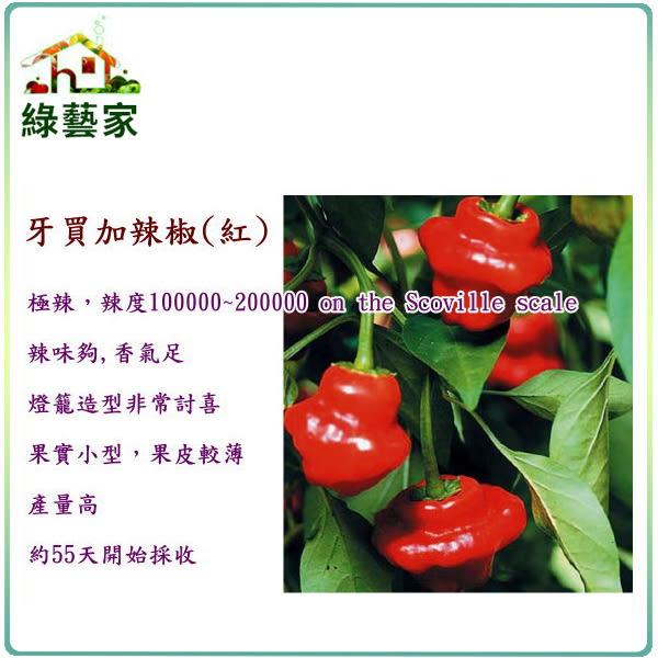 【綠藝家】G46.牙買加辣椒(紅,極辣)種子5顆