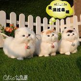 模擬貓咪玩具小貓公仔動物擺件兔毛絨寵物模型生日禮物帶聲音「七色堇」