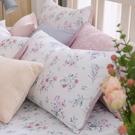 鴻宇 雙人特大床包組 100%精梳純棉 黛兒 台灣製C20101