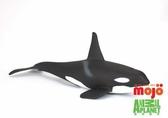 【Mojo Fun 動物星球頻道 獨家授權】 虎鯨 387114