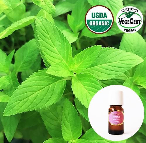 有機精油10ml- 歐薄荷 Peppermint Japanese Organic Essential Oil~美國USDA有機認證