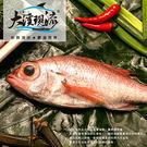 野生現撈 紅喉魚「赤鮭」( 小尾 250...