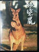 影音專賣店-P06-165-正版DVD-電影【紅袋鼠】-澳洲是有袋類動物的最後庇護所