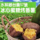 美食饗宴-水林鄉台農57號冰心蜜糖烤番薯