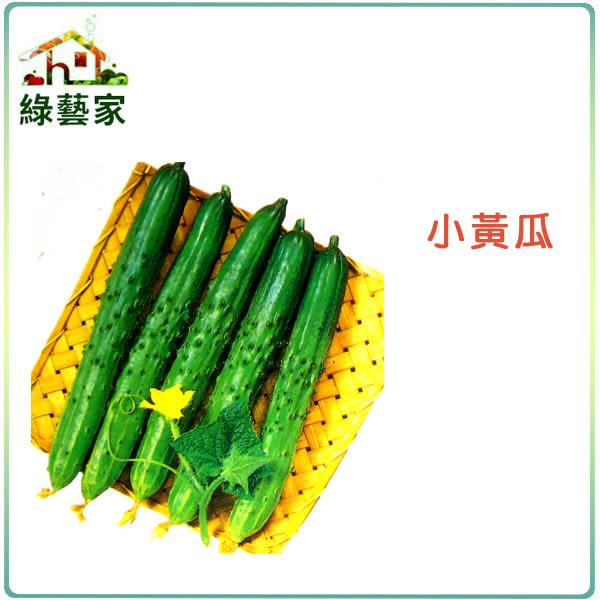 【綠藝家】大包裝G11.小黃瓜種子20克(約640顆)