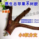 龍貓鬆鼠倉鼠荷蘭豬小蜜磨牙蘋果木枝小蘋果樹杈寵物用品玩具『小淇嚴選』