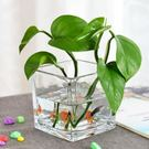 花瓶簡約水培玻璃器皿透明方缸綠蘿睡蓮銅錢草水培花盆玻璃花瓶  汪喵百貨